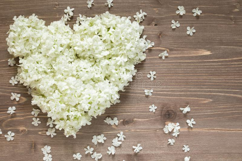 White hydrangea flowers in heart shape on wooden background. Valentine`s day stock photo
