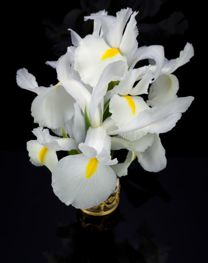 White Irises. This is an image isolated against a black background of graceful white irises in a gold filigree holder stock images