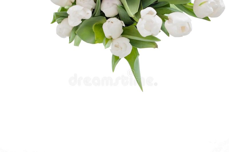 White isolated tulips on a table were used as a Spring decoration background stock photography