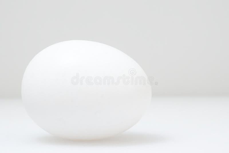 white jajko fotografia stock
