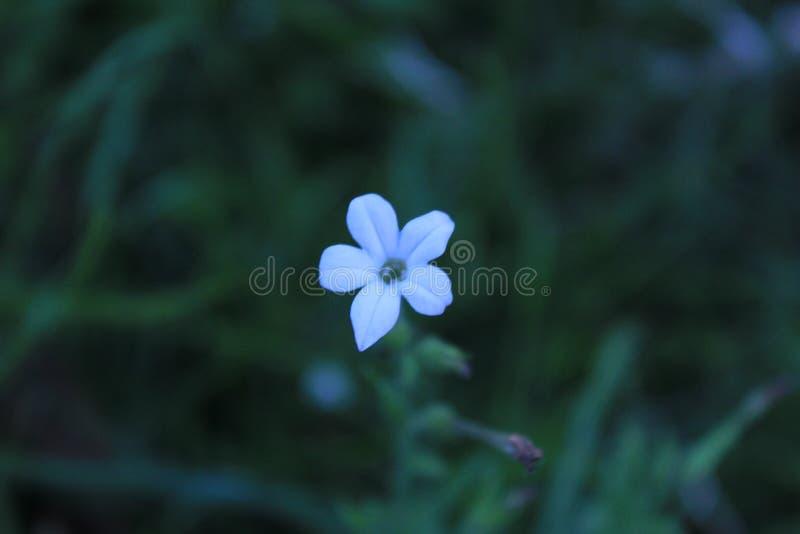 White Jungle flower royalty free stock image