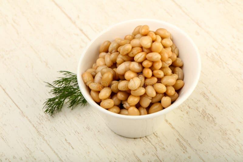 White kidney bean stock photo