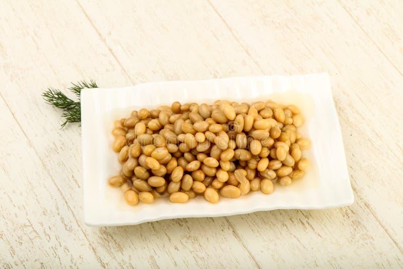 White kidney bean stock image