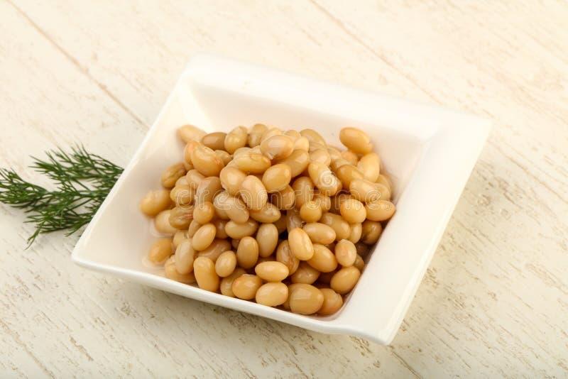 White kidney bean royalty free stock photography
