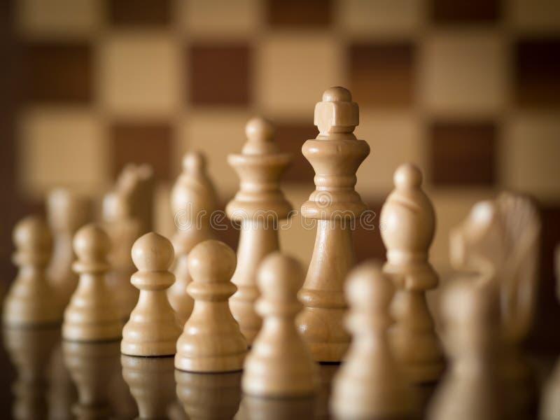 White King Stock Photography