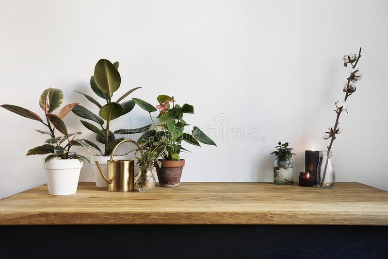 White kitchen interior with green plants on rustic wooden table, modern workplace in nordic style. royalty free stock photos