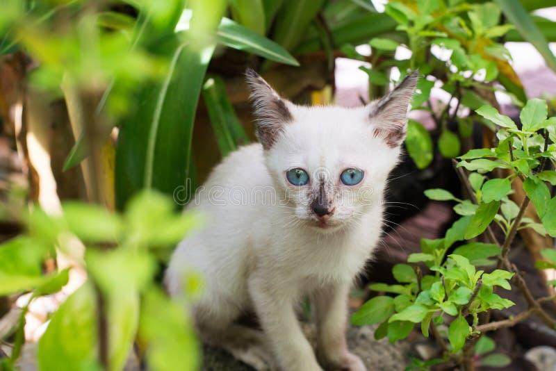 White kitten with blue eyes. In the garden stock image