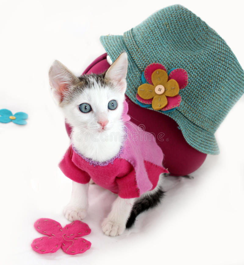 White kitten and a blue hat royalty free stock photo