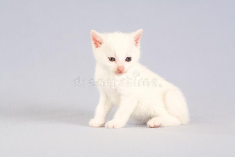 White kitten on the floor stock photography