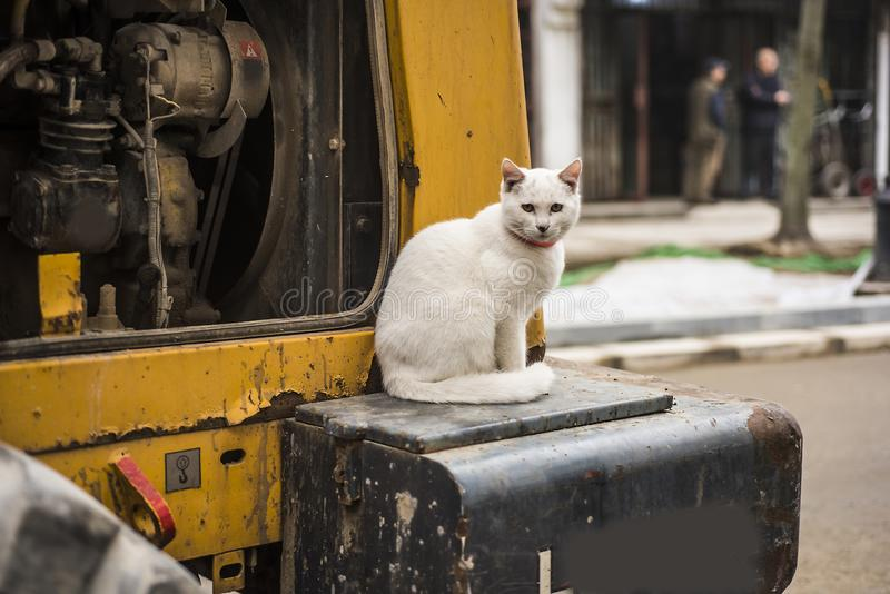 Cat Excavator Stock Images - Download 660 Royalty Free Photos