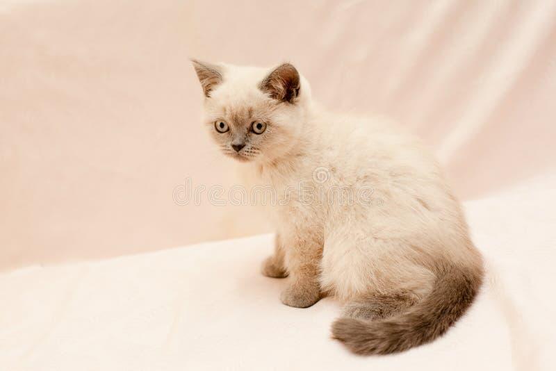 Download White kitten stock photo. Image of pink, look, baby, horizontal - 35211452