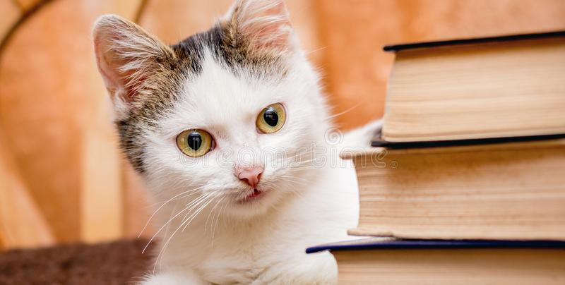 A white kitten sits at the pile of books. Visiting the library. Reading your favorite books royalty free stock photos