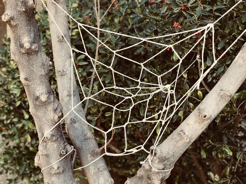 White Knitted Web on Tree royalty free stock photography
