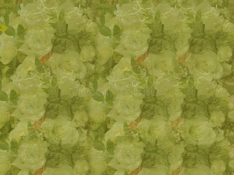 Grunge green roses royalty free stock images