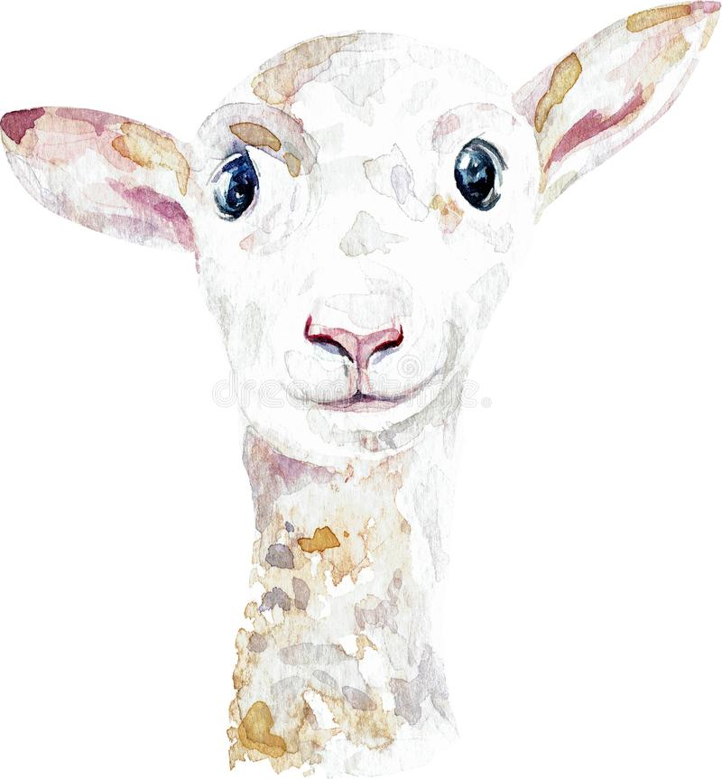 White lamb. Close-up of ship head. Watercolor illustration isolated on white background. White lamb. Close-up of ship head. Watercolor illustration royalty free illustration