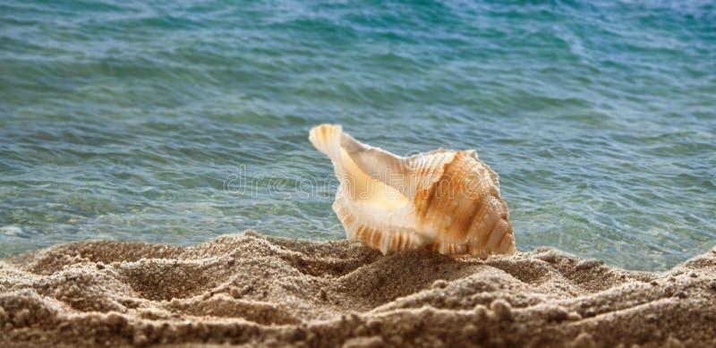 White light shell on sea sand on beach stock photography