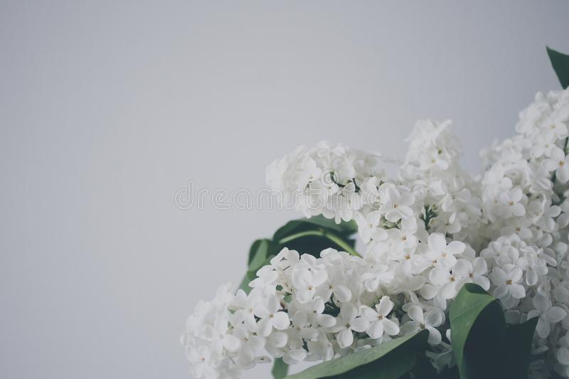 White Lilac In Bloom Free Public Domain Cc0 Image