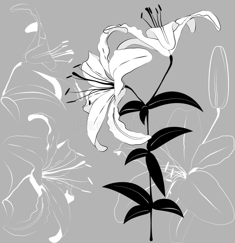 Download White lilies stock vector. Illustration of petal, nature - 23997197