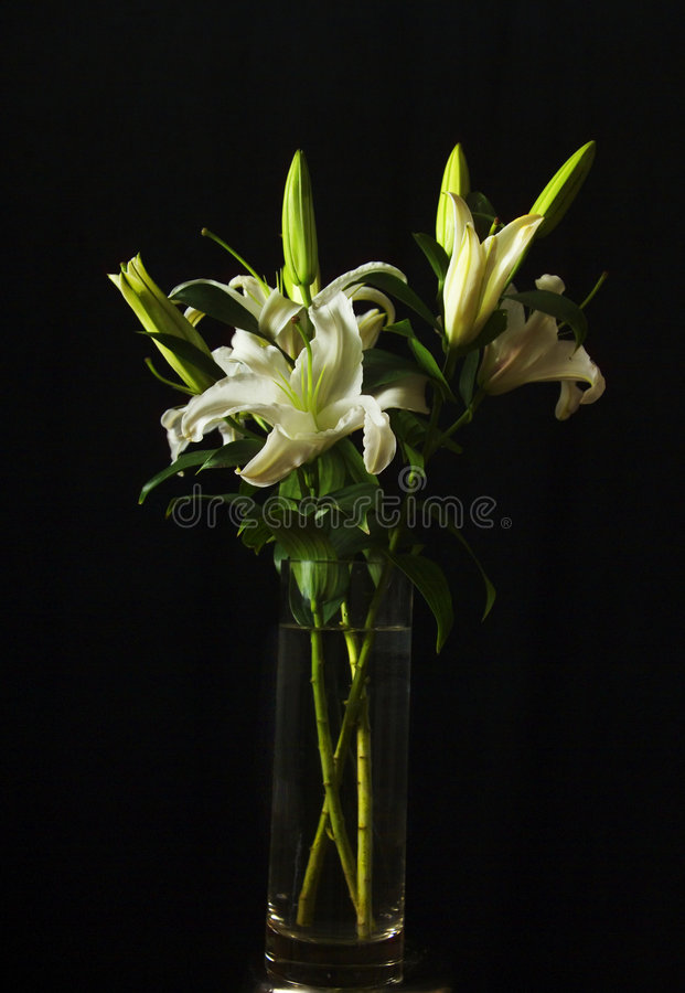 Free White Lilies Stock Image - 441401