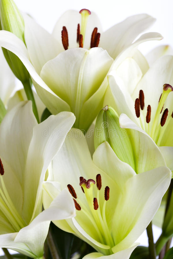 Download White Lily stock image. Image of seasonal, lillies, flower - 14563295