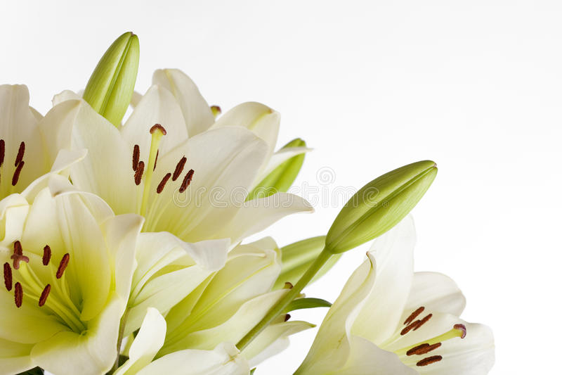Download White Lily stock photo. Image of spring, isolated, lilium - 14563314