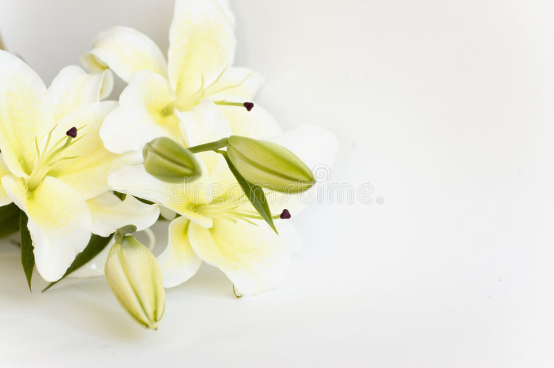 Download White lily stock image. Image of nature, florist, petal - 3398637