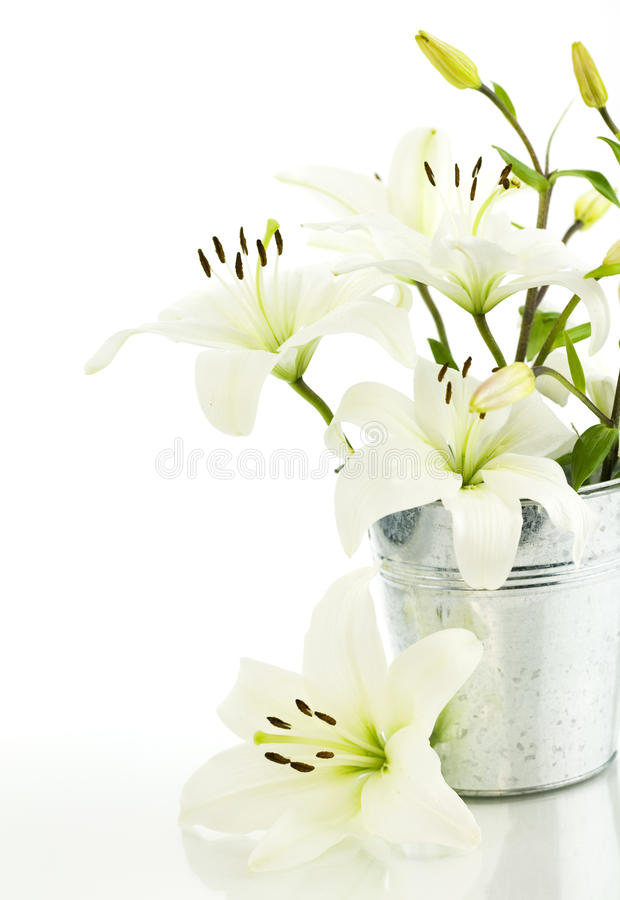 Free White Lily Flowers Royalty Free Stock Photo - 10105705