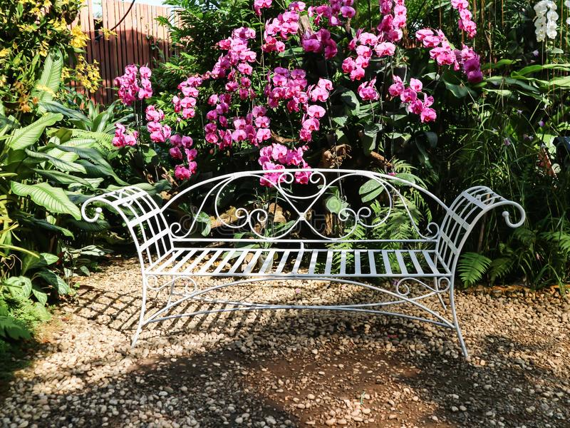 White line steel vintage style bench in garden with beautiful white violet purple pink orchid flower tree background royalty free stock photos