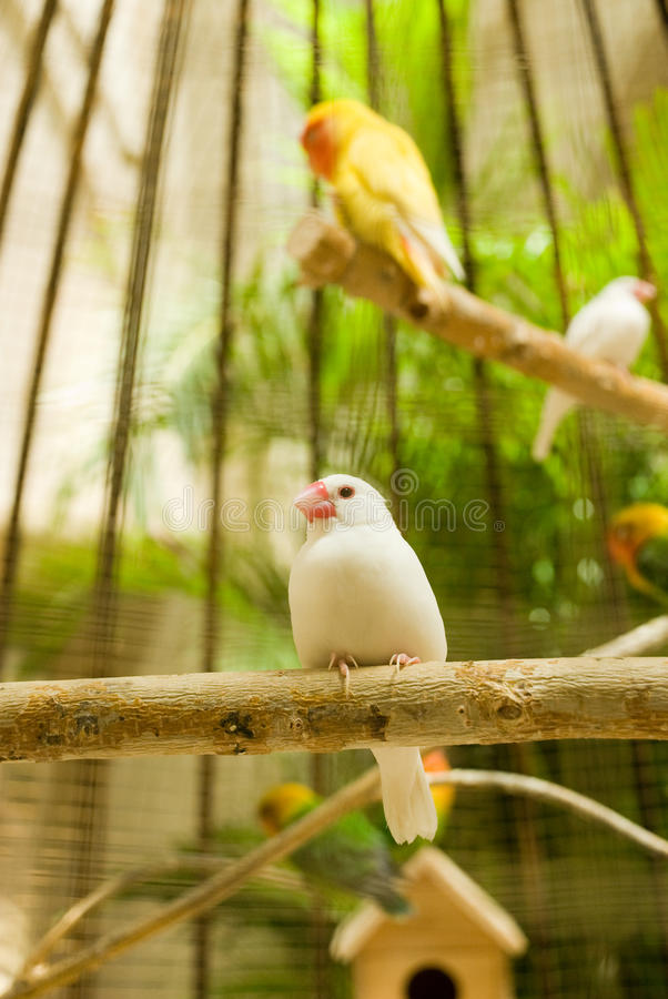 Download White Little Bird stock image. Image of branch, taxidermy - 10756619