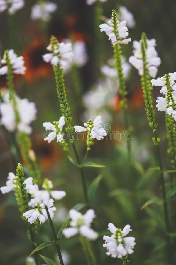 White little flowers royalty free stock photography