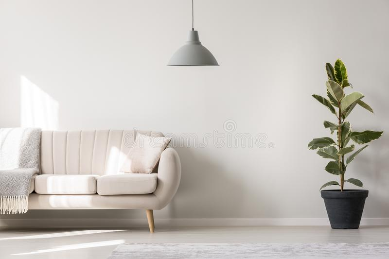 White living room with ficus vector illustration