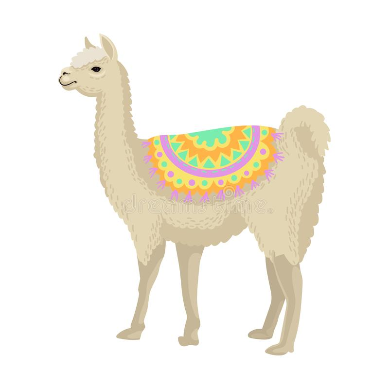 White llama alpaca animal wearing bright ornamented poncho, side view vector Illustration on a white background. White llama alpaca animal wearing bright stock illustration