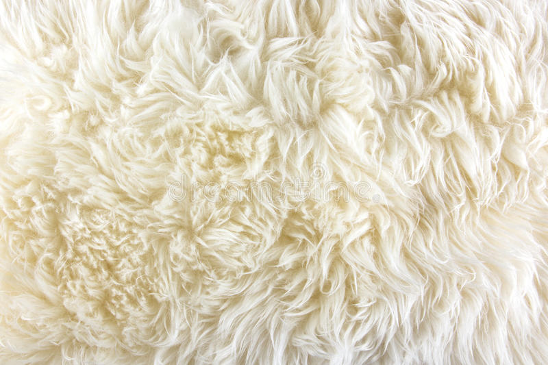White long hair fur background royalty free stock photography