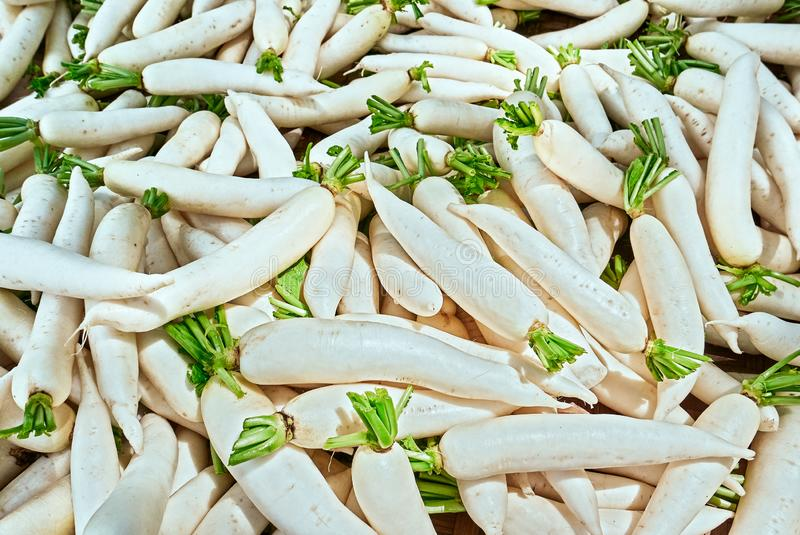 White long radishes seen in a market in the Philippines stock image