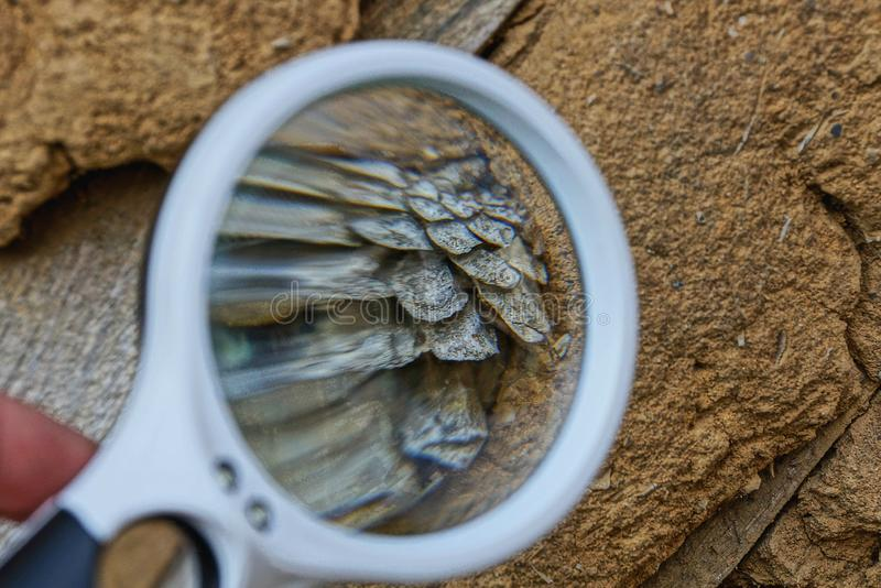 White loupe magnifies a dry gray bump in brown clay. One white magnifier enhances a dry gray lump in brown clay royalty free stock images