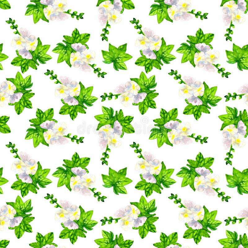 White mallow with leaves. Seamless pattern. Hand drawn watercolor illustration. Texture for print, fabric, textile. White mallow with leaves. Seamless pattern royalty free stock photos