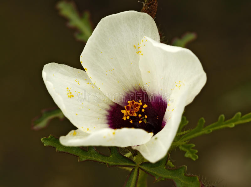 White meadow flower stock images