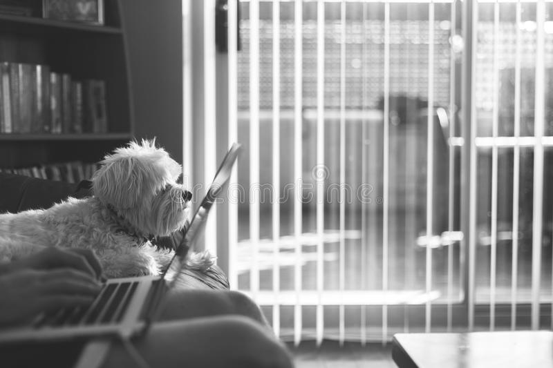 White Medium Size Dog Sitting On Couch Beside Person Using Laptop Grayscale Photo Free Public Domain Cc0 Image