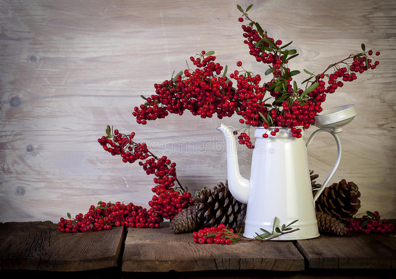 White Metal Coffee Pot with Red Berries. A vintage white metal coffee pot filled with pyracantha branches heavy with red berries, additional berries and pine royalty free stock image