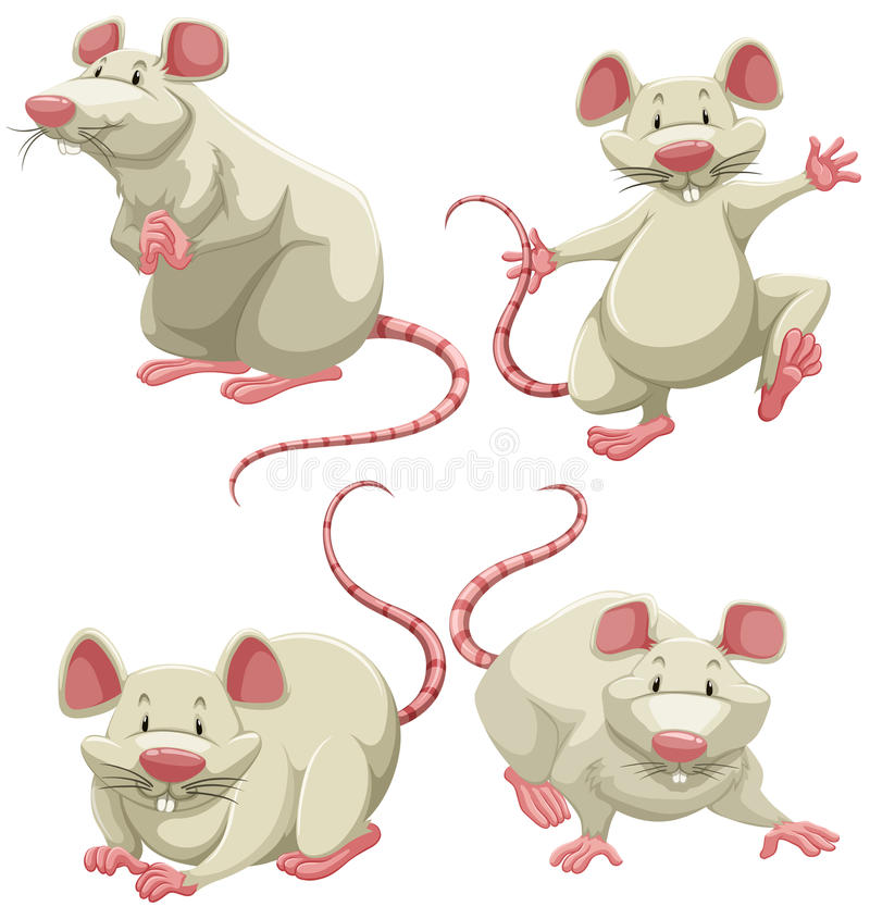 White mice. Four white mice doing different actions on white background stock illustration