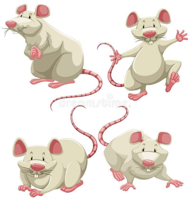 White mice stock illustration