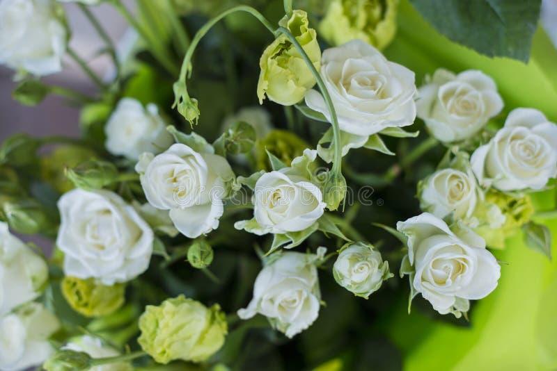 White mini roses stock photography