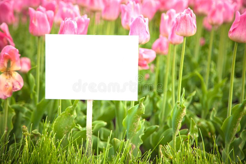 Layout plates on the background of flowers royalty free stock photo