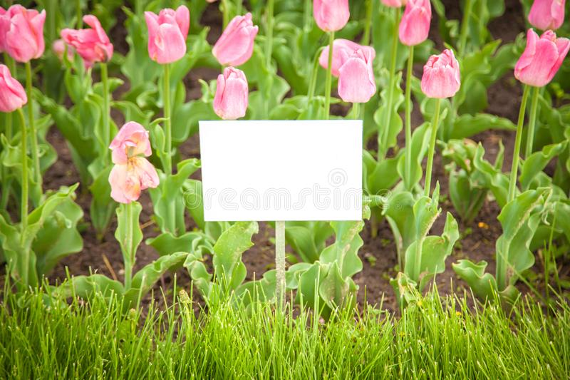 Layout plates on the background of flowers royalty free stock photography