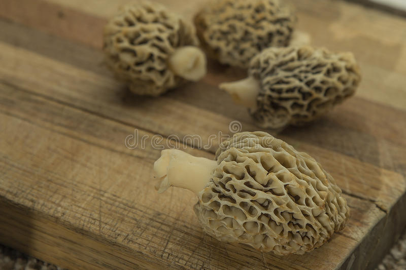 White morel mushrooms on cutting board, all natural and picked i stock photos