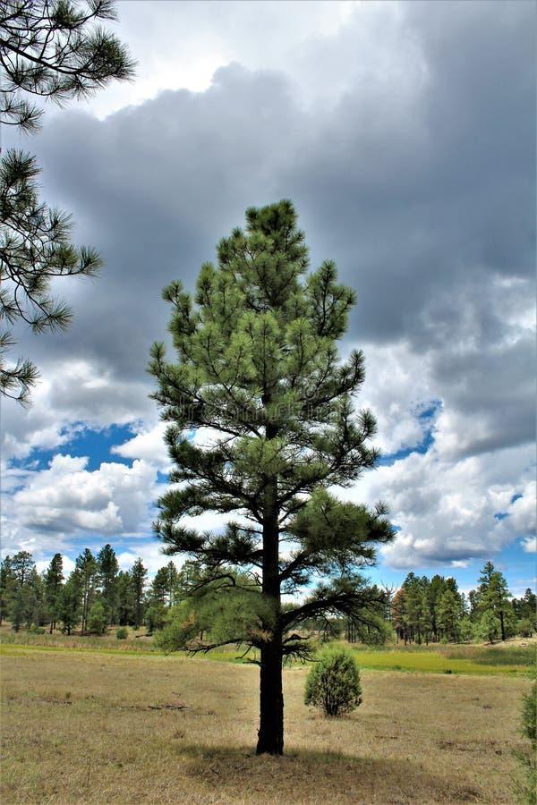 White Mountain Nature Center, Pinetop Lakeside, Arizona, United States. Scenic landscape view at the White Mountain Nature Center, located in Pinetop Lakeside stock photo