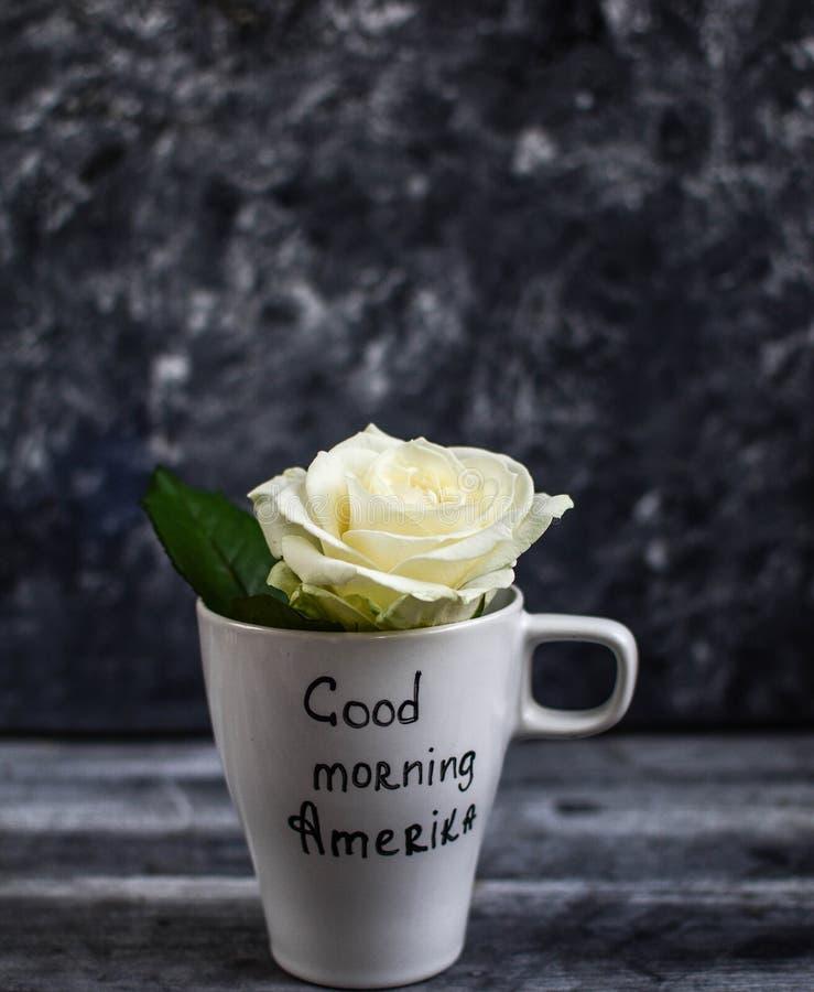White mug, mug, inscription on a white mug - good morning America. White mug with a white rose, a white rose, one rose, one rose in a white mug,I love America royalty free stock image