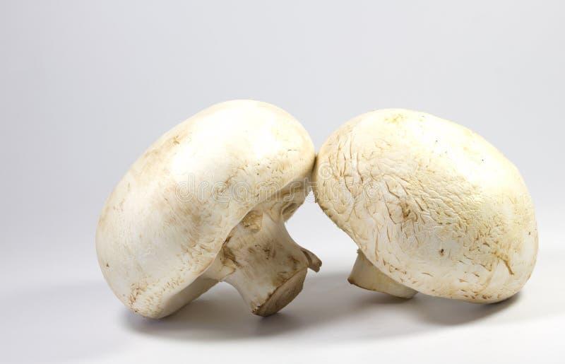 White mushroom stock photography