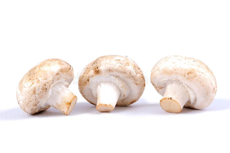 Mushrooms on a white background stock image