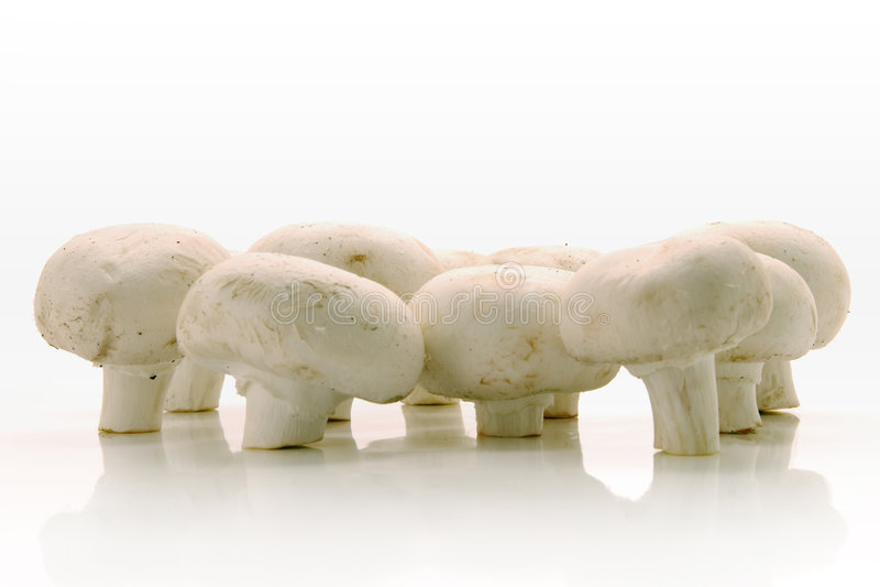 White mushrooms. Over white background stock photos